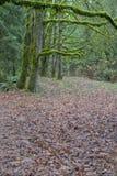 Chemin 2 de forêt humide photos libres de droits
