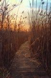 Chemin Photo stock
