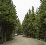 Chemin photos stock
