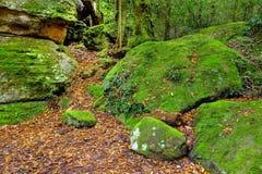 Chemin abondant de forêt humide Image libre de droits
