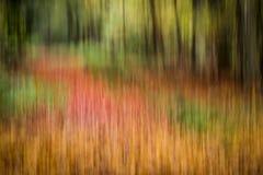 Chemin abstrait à travers les arbres d'une forêt Photographie stock