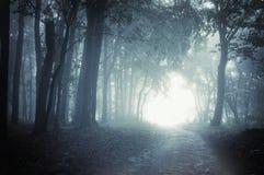 Chemin à allumer par une forêt foncée la nuit Images stock