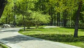 Chemin artificiel dans les bois Photos libres de droits