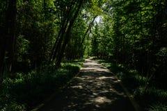 Chemin asphalté en bois louches d'été ensoleillé Photographie stock libre de droits