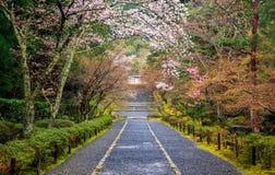 Chemin au tombeau du Japon Photo stock