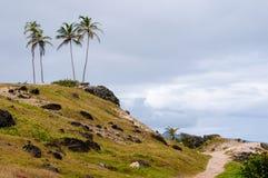 Chemin aux palmiers photos stock