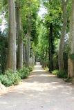 Chemin avec beaucoup d'arbres de chaque côté Images libres de droits