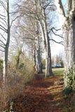 Chemin avec des arbres Image stock