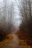 Chemin avec des arbres Paysage de saison d'hiver Brouillard et regain Photo libre de droits