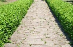Chemin avec des buissons dans le jardin Image stock