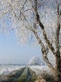 Chemin avec les arbres blancs Images stock