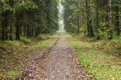Chemin avec les feuilles tombées dans la forêt Photo stock