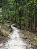 Chemin blanc de gravek dans le bois Photos stock