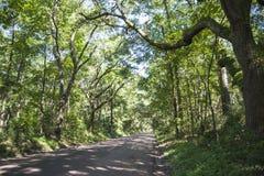 Chemin bordé d'arbres scénique sur l'île d'Edisto, Sc Photo stock
