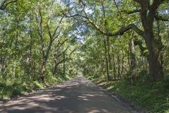 Chemin bordé d'arbres scénique sur l'île d'Edisto, Sc Photos stock