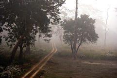 Chemin brumeux à travers la forêt Photographie stock