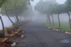 Chemin brumeux à travers les arbres aux EAU photographie stock