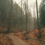 Chemin brumeux photographie stock libre de droits