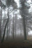 Chemin brumeux Photo stock