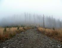 Chemin brumeux Photographie stock