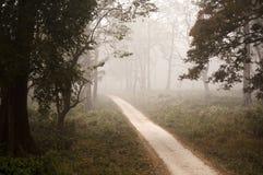 Chemin brumeux de jungle Photo libre de droits