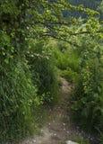 Chemin caché Image stock