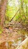 Chemin caché dans les bois photo libre de droits