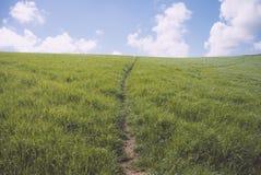Chemin central fait par le flanc de coteau d'herbe Photos libres de droits