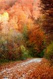 Chemin coloré Photo libre de droits