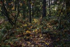 Chemin coloré d'automne image stock