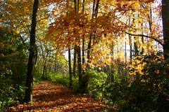 Chemin coloré d'automne photos libres de droits