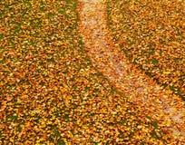 Chemin couvert de feuilles d'automne image libre de droits