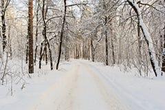 chemin couvert de neige dans la forêt d'hiver Image libre de droits