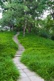 Chemin délimité par des arbres Images stock