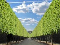 Chemin délimité par des arbres de jardin Image libre de droits