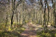 Chemin d'écoulement de Kirkconnell dans des arbres Images libres de droits