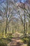 Chemin d'écoulement de Kirkconnell dans le portrait d'arbres Photos libres de droits