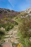 Chemin d'été s'enroulant dans la distance Images stock
