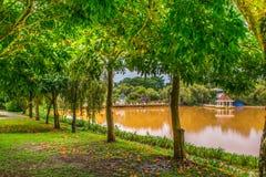 Chemin d'étang et d'arbres Photos stock