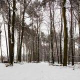 Chemin d'allée de neige dans la forêt d'hiver images stock