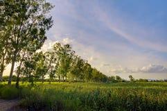 Chemin d'arbre de nature images stock