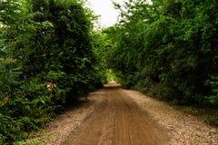 Chemin d'arbre de tunnel Photos libres de droits