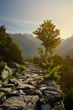 Chemin d'arbre et de montagne un matin ensoleillé Images stock