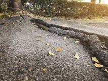 Chemin d'asphalte de fente de racine d'arbre dans le concept léger chaud images stock