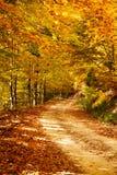 Chemin d'automne Photo stock