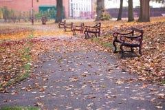 Chemin d'automne avec des bancs Photo stock