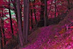 Chemin d'automne dans la forêt photographie stock