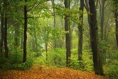 Chemin d'automne dans la forêt Image stock