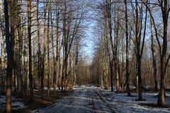 Chemin d'automne en parc Photo stock