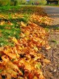 Chemin d'automne encadré par des feuilles d'érable Image libre de droits